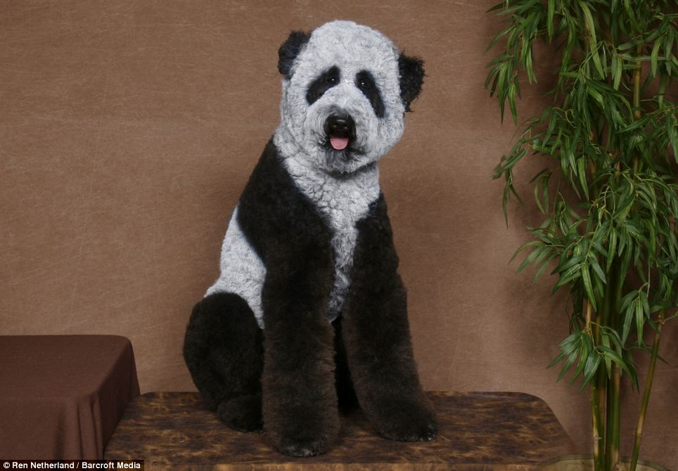 I thought Sad Panda Pup was pretty cool, until Panda Chow came along and stole his thunder