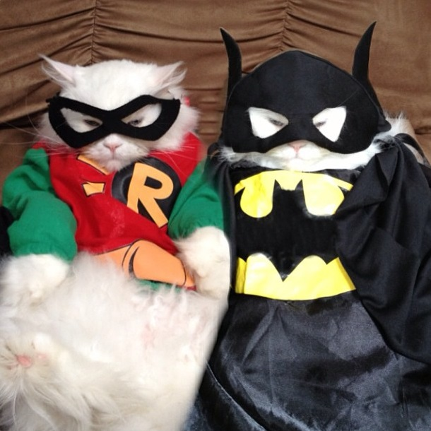 batman-and-robin-cats-01