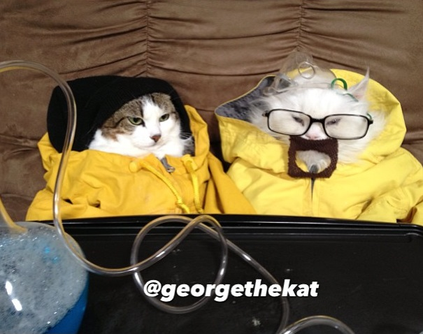 cosplay-breakingbad-cat-costume-2