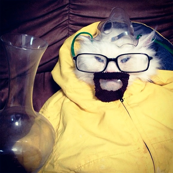 cosplay- breaking bad -cat-costume