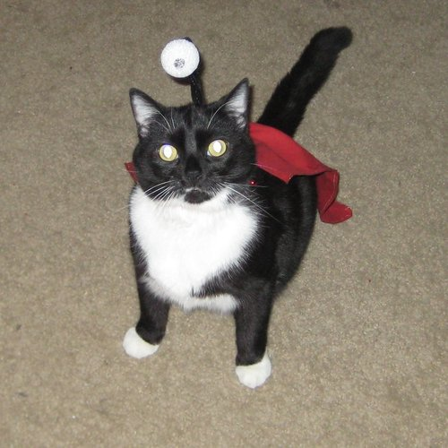 Futurama cosplay nibbler cat costume