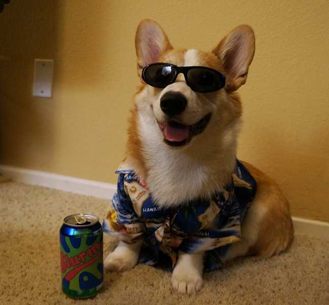 Futurama cosplay corgi as Slurms McKenzie